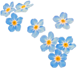 Forget Me Not PNG Transparent PNG image