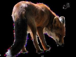 Fox PNG Clipart PNG Clip art