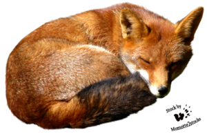 Fox PNG Image PNG Clip art
