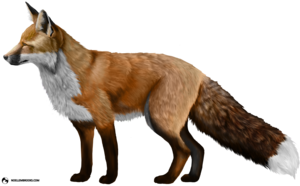 Fox PNG Photos PNG Clip art