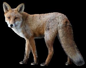 Fox PNG Pic PNG Clip art