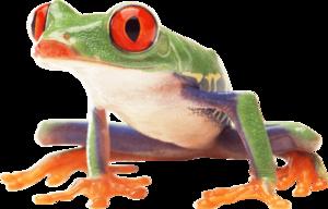 Frog PNG Photos PNG Clip art