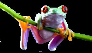 Frog PNG Transparent Image PNG Clip art