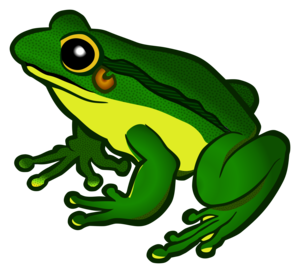 Frog Transparent Background PNG Clip art
