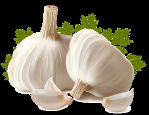Garlic PNG Clipart PNG Clip art