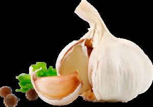 Garlic PNG HD PNG Clip art