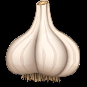 Garlic PNG Image PNG Clip art
