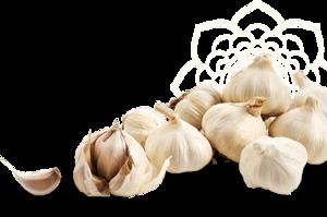 Garlic PNG Transparent Image PNG Clip art