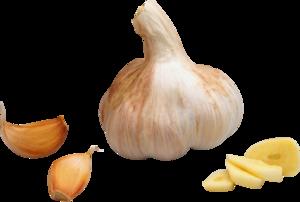 Garlic PNG Transparent PNG Clip art