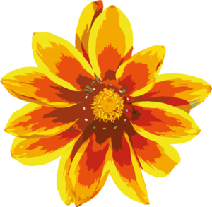 Gazania PNG Clipart PNG icons