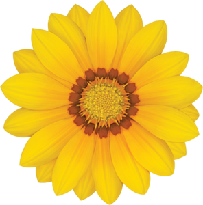 Gazania Transparent PNG PNG icon