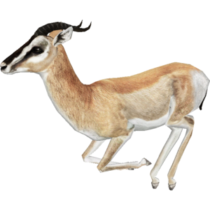 Gazelle PNG Free Download PNG Clip art