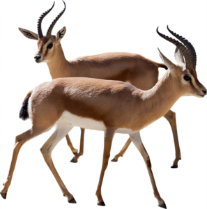 Gazelle PNG Photos PNG Clip art