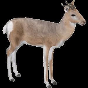 Gazelle PNG Pic PNG Clip art