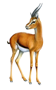 Gazelle PNG Transparent Image PNG Clip art