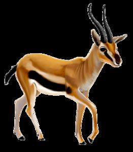 Gazelle Transparent PNG PNG Clip art