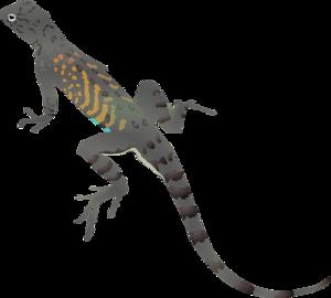 Geckos Download PNG Image PNG Clip art