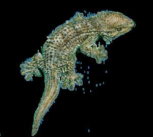 Geckos PNG Photos PNG Clip art
