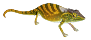 Geckos PNG Pic PNG clipart