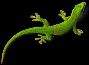Geckos Transparent Background PNG Clip art