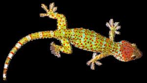Geckos Transparent Images PNG PNG Clip art