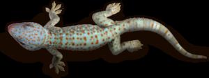 Geckos Transparent PNG PNG Clip art