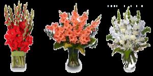 Gladiolus PNG Image PNG Clip art