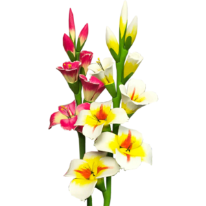 Gladiolus PNG Photo PNG icons
