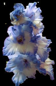 Gladiolus PNG Transparent Image PNG Clip art