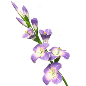 Gladiolus PNG Transparent Picture PNG Clip art