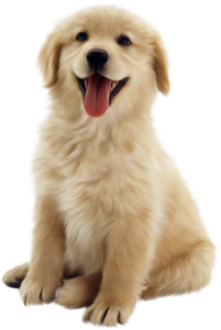 Golden Retriever PNG Transparent Background PNG Clip art