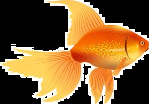 Goldfish PNG Image PNG Clip art