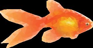 Goldfish Transparent Background PNG Clip art