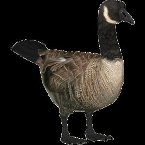 Goose PNG Clipart PNG Clip art