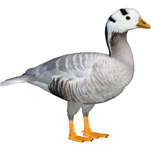 Goose PNG File PNG icon