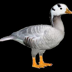 Goose PNG File PNG Clip art