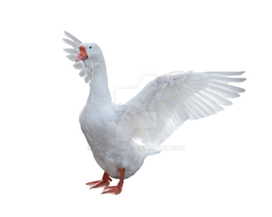 Goose PNG Picture PNG Clip art
