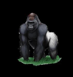 Gorilla PNG Clipart PNG Clip art