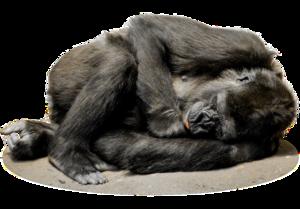Gorilla PNG File PNG Clip art