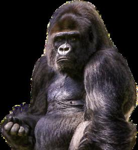 Gorilla PNG Image PNG Clip art