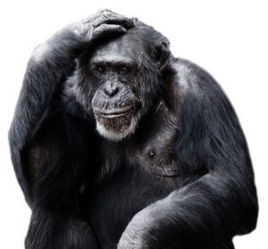 Gorilla PNG Pic PNG Clip art