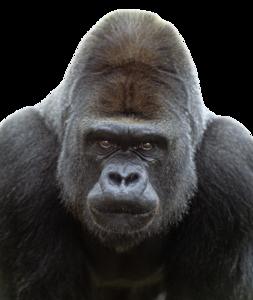 Gorilla PNG Transparent Image PNG clipart