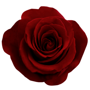 Gothic Rose PNG Photos PNG Clip art