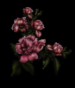Gothic Rose Transparent Background PNG Clip art