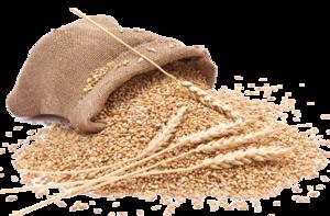 Grain PNG Clipart PNG Clip art