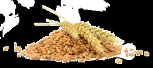 Grain PNG File PNG Clip art