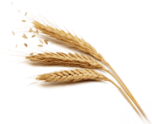 Grain PNG Free Download PNG Clip art