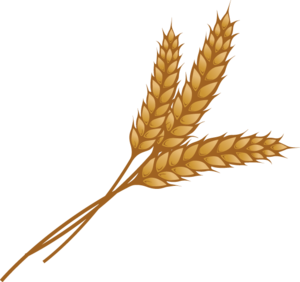 Grain PNG Image PNG Clip art