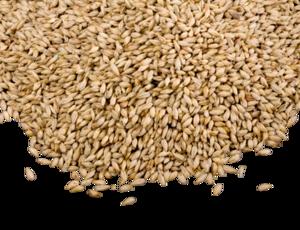 Grain PNG Photo PNG Clip art