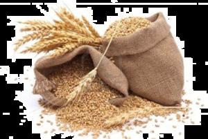 Grain PNG Photos PNG Clip art